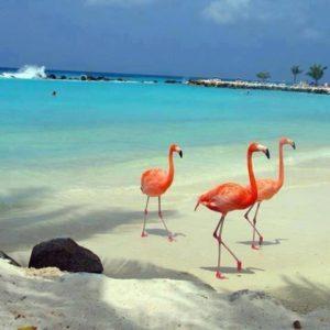 visite et excursion des flamands rose sur l'île d'holbox