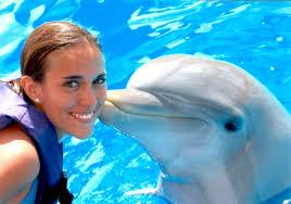 visitez et nagez avec les dauphins