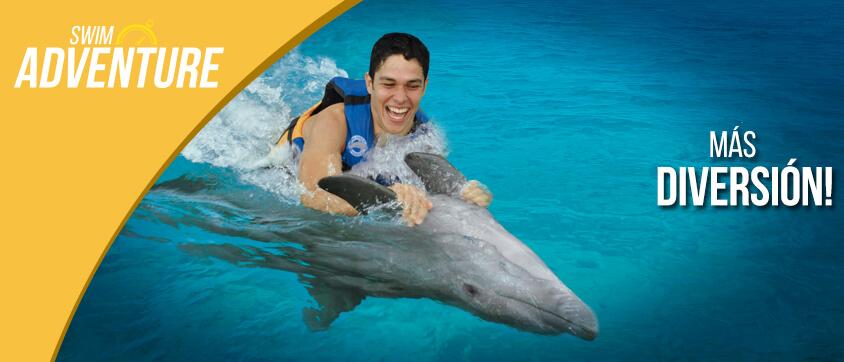 nagez avec les dauphins swim adventure