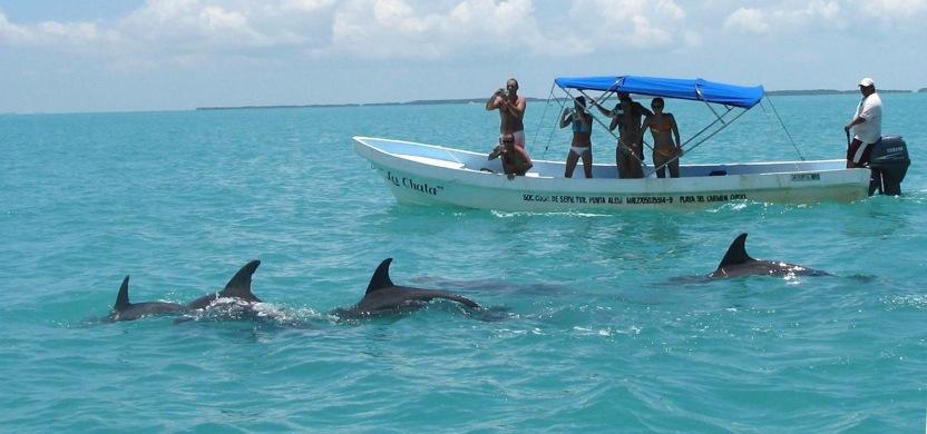 decouverte des dauphins en liberte a sian kan