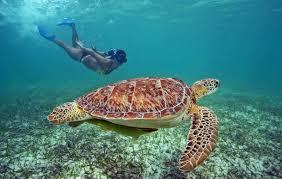 nagez gratuitement avec les tortues à akumal