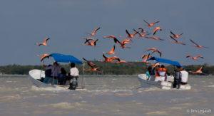 rio lagartos et oiseaux migrateur excursion de playa del carmen